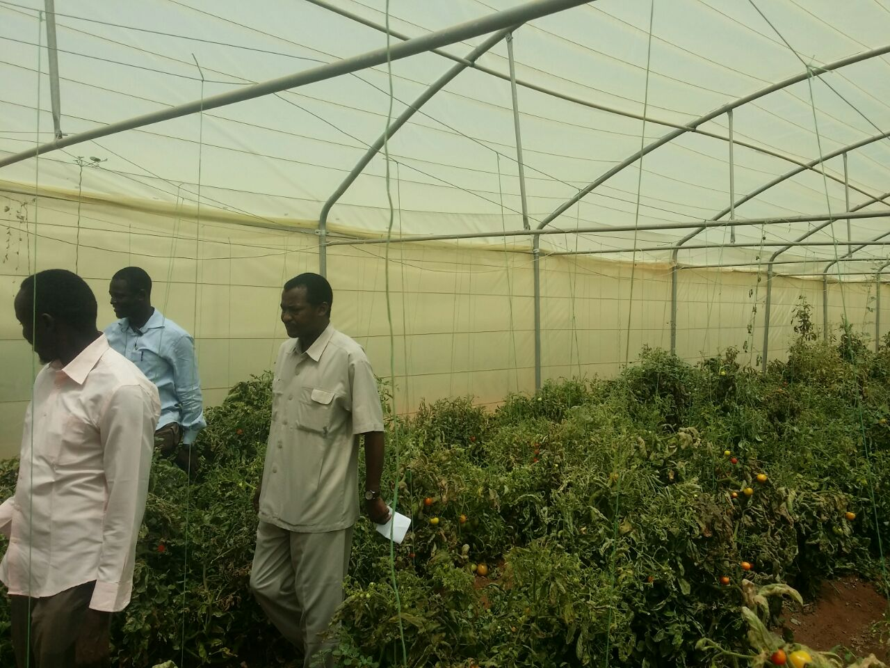 دائرة الوحدات الانتاجية تقوم بزيارة مزرعة جامعة افريقيا العالمية