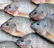 ورشة الإستزراع السمكي